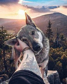 20 Best Funny Animal Photos for Wednesday Morning. Serving only the best funny photos in 2019 that will help you laugh today. Funny Animal Photos, Cute Funny Animals, Dog Photos, Cute Baby Animals, Animals And Pets, Animal Pictures, Nature Animals, Funny Pics, Funny Pictures