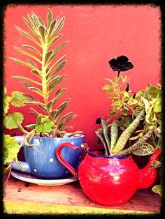 Plantas tomando te