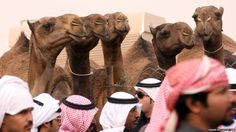 Kuwaiti men stand near camels during a competition in al-Salmi district, west of Kuwait City