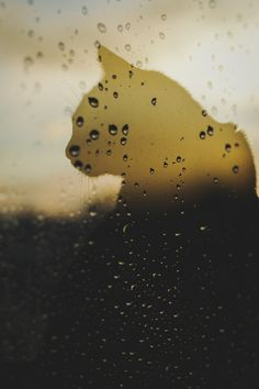 "Double exposure. ""Cat and rain"" PH: Pablo Muñoz."
