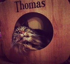 Oh my gosh and I love Thomas' gorgeous fluffy cheeks!  #cat #catsofinstagram #cats_of_instagram #catfurnature #catfurniture #catsinboxes #cattoy #INSTACAT_MEOWS #cutecat #PurrMachine #catsinboxes #catbox #Excellent_Cats #BestMeow #dailykittymail #thecatniptimes #catcube #catpod #ArchNemesis #FlyingArchNemesis #myindoorpaws #ififitsisits #cutecatcrew #catchalet #catnip #themeowdaily #kitty #catpyramid #miuandmaosfurriends