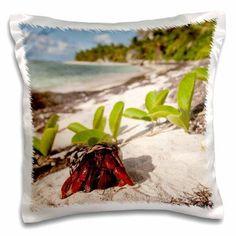 3dRose Hermit crab, Pajaros beach, Mona Island, Puerto Rico-CA27 MPR0064 - Maresa Pryor, Pillow Case, 16 by 16-inch