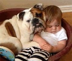 tumblr lv72r8c8vh1qeep40o4 250 Animal hugs are best hugs (10 GIFS)