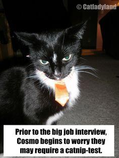 Catnip-Testing Anxiety #catsincare - Care for cat at Catsincare.com!