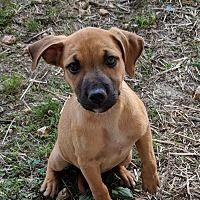 Pin By Naz Q On Adoption Group Labrador Retriever Labrador Dog Adoption
