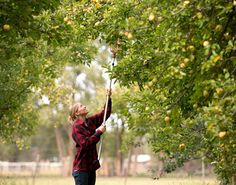 Above: A good day of picking might just result in an apple crisp pie. Photography by Douglas Merriam. Farm stands all around the state have the raw materials to make sweet treats and other homemade