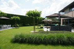 siergras, bolcatalpa De strakke tuin - Groen van bij ons - Bloemen en planten
