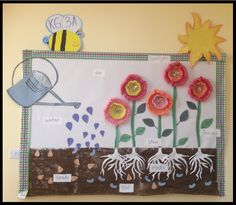 Plants bulletin board idea- Plant life cycle- Enjoy!