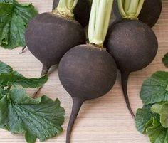 Dbaj o zdrowie: Czarna rzepa – smaczny sposób na zdrowy organizm