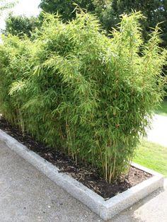 Bambus Raumteiler