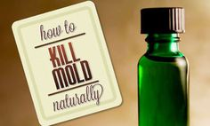 3 Ways to Kill Mold Naturally See the website for 3 recipes that include: 1. Tea Tree oil 2. Grapefruit Seed Extract 3. Vinegar Spray.