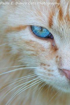 Paolo E Bianco Cats photography