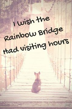22 trendy Ideas for dogs love quotes rainbow bridge Quotes Rainbow, I Love Dogs, Puppy Love, Yorkshire Terrier, Animals And Pets, Cute Animals, Pet Loss Grief, Motivacional Quotes, Pet Remembrance