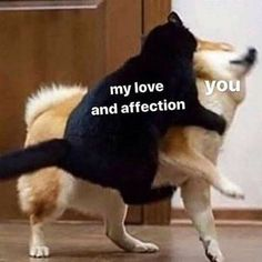 Cute I Love You, Cute Love Memes, Love You Memes, Funny Love Pics, In Love Meme, Cute Memes For Her, I Like You Meme, I Love You Tumblr, Cute Couple Memes