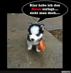Best pictures, videos and sayings and there are tä - Lustige Tiere Hund - Cute Funny Animals, Funny Cute, Funny Dogs, Cute Cats, Tierischer Humor, Man Humor, Animal Pictures, Cool Pictures, Funny Pictures