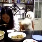 How dare you to eat alone? Give that soup to me Bolly4u