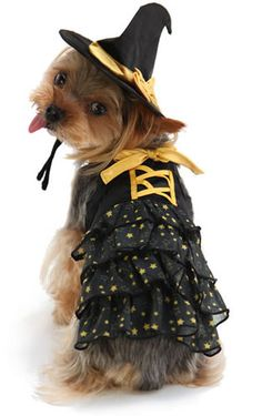 halloween costumes for dogs pet costumes for dogs pinterest halloween costumes costumes and dog - Dogs With Halloween Costumes On