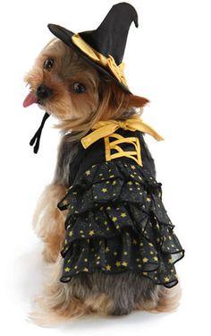 Halloween costume for dogs ハロウィン 星柄魔女ワンピース