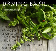 How to dry basil!