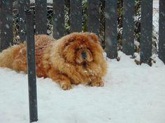 Mishka in the snow