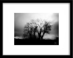 https://www.etsy.com/ie/listing/201235404/tree-photography-1-landscape-photography?ref=shop_home_active_6 Tree Photography #1, landscape photography, forest photography, nature photography, black and white photography. From €19.99 unframed.