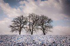 Skyline of trees by ChristianThür Photography on Creative Market