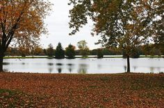 "Check out my art piece ""The Stillness Of Autumn"" on crated.com #fall #autumn #art #photography #leaves"