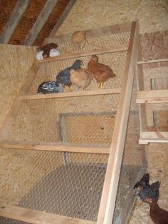 Chicken Coop - Image result for chicken coop roost instructions Building a chicken coop does not have to be tricky nor does it have to set you back a ton of scratch.