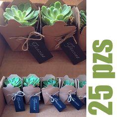 Succulent Favors! Suculentas en cajitas chinas - Globos de Luz | Artículos y detalles para bodas y eventos | Ideas originales para fiestasGlobos de Luz