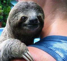 ok, i admit they are a little creepy sometimes (depending on what kind of sloth) but he just looks so cool and happy!