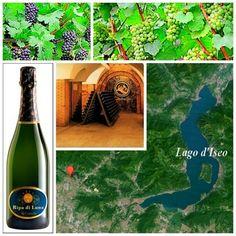 www.vinoway.com | La zona vitivinicola della provincia di Bergamo è solitamente conosciuta per il Valcalepio Doc.  Rappresenta la protagonista di un'altra specifica denominazione, il Moscato di Scanzo Docg, un passito rosso la cui produzione è prevista nella zona vocata del Comune di Scanzorosciate. - See more at: http://www.vinoway.com/rubriche/spumantiway/item/2371-un-metodo-classico-cullato-dalle-colline-bergamasche.html#sthash.dVTGQTQh.dpuf | @Daniele Sala #spumantiway #metodo #classico