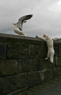 「ああっ、猫に狙われてる…」完全にロックオンされた写真16枚