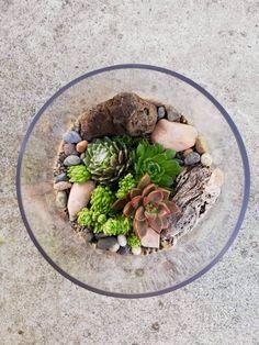 Small Cylinder Terrarium Auckland, Terrarium, Succulents, Plants, Home Decor, Terrariums, Succulent Plants, Flora, Interior Design