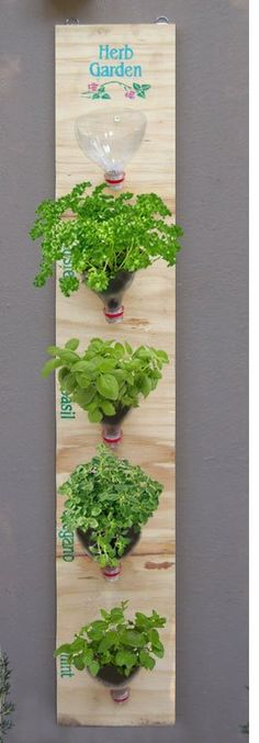 Hanging herb garden made with scrap of wood and plastic 2 liter bottles