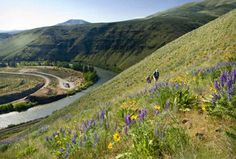 Great desert hikes in Washington - Find warmth, blankets of wildflowers, birdsong and unbeatable vistas.
