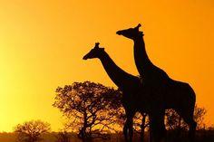 As mais belas imagens da África