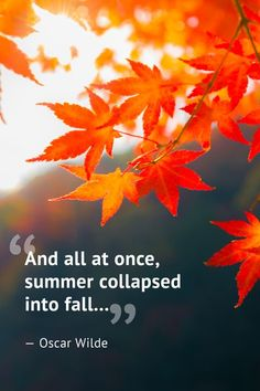Best Quotes About Autumn. Inspiring Fall Season Quotes - Best Sayings About Autumn to Remind You Just How Amazing Autumn Is November Quotes, Sunday Quotes, Life Quotes Love, Best Quotes, Fall Quotes, Autumn Quotes Inspirational, Fall Memes, Summer Quotes, Amazing Quotes