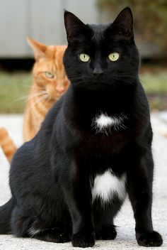 Ravenpaw and  Firestar?!