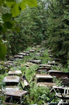 Traffic jam in a Belgium forest
