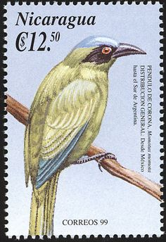Blue-crowned Motmot stamps - mainly images - gallery format