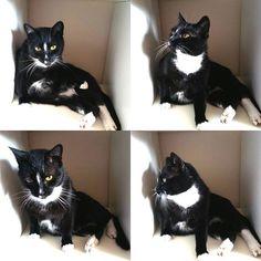 Kaum hab ich ein Regal leer geräumt, kommt der Kater und macht sich breit.   #cat #Katze #schwarz #kater #schlafen #schrank #regal #tier #haustier #schlafplatz #kuscheln #lovely #süß #tieger #animals #animalpic #instaanimal #sleepingcat #mau