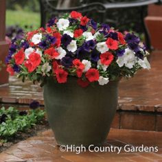 Set of 3 Trio planted pots includes Petunia Suncatcher 'Midnight Blue', 'Red' and 'White'.