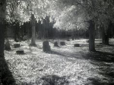 Abandoned Bachelor's Grove Cemetery, Chicago (USA). It is well-known for its haunted stories and ghost sightings. There are countless reports of glowing balls, apparitions, squeaks, moans, groans and unexplained noises.