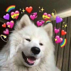 Memes Heart Emoji 34 Ideas For 2019 Wallpaper Iphone Cute, Cute Wallpapers, Girl Wallpaper, Disney Wallpaper, Wallpaper Quotes, Wallpaper Backgrounds, Sapo Meme, Memes Amor, Heart Meme