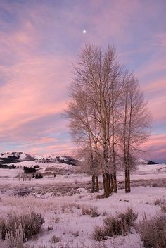 picture of Lamar Valley Sunrise Yellowstone Image