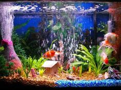 Fish Tank Volcano And Stripe Of Neon Rocks · Aquarium DecorationsAquarium  IdeasFish ...