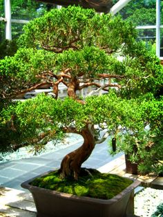 A Bonsai Grows in Brooklyn | Flickr - Photo Sharing!