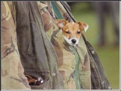 Terriers in the Exmoor England hunt country do NOT run with the hounds but are often carried in terrier pouches.   Google Image