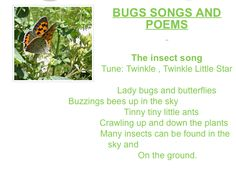 Bug songs and poems Bug Songs, Bug Activities, Star Butterfly, Little Star, Bugs, Poems, Beetles, Poetry, Verses