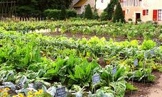 Stunning Backyard Ideas With Ground Gutter 40 The Crawl, Dry Creek, Vegetable Garden Design, Garden Planning, Container Gardening, Shrubs, House Plants, Succulents, Vegetables